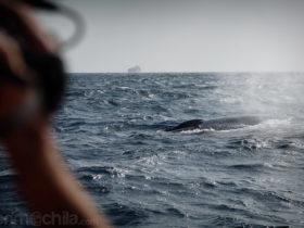 Filmando a la ballena azul
