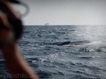Avistamiento de la gran ballena azul en la costa de Mirissa en Sri Lanka