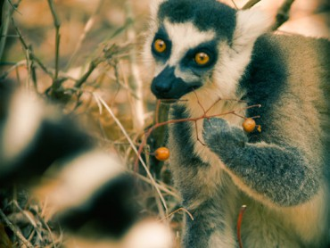 Descárgate gratis el libro digital de Madagascar con mochila