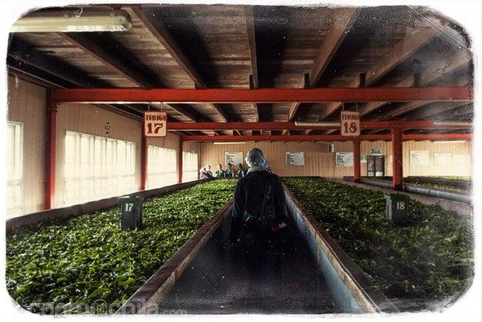 En el interior de la empresa de té