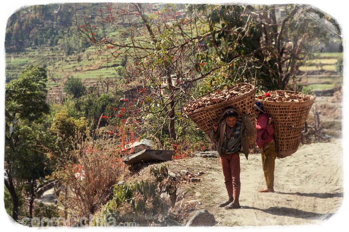 Los niños con las cestas de hojas secas