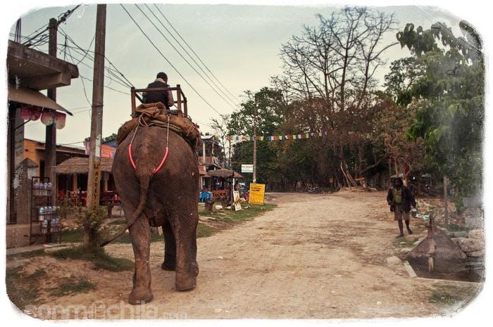 """Uno de los elefantes preparado para """"turistadas"""""""