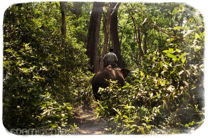 El elefante con su mahout