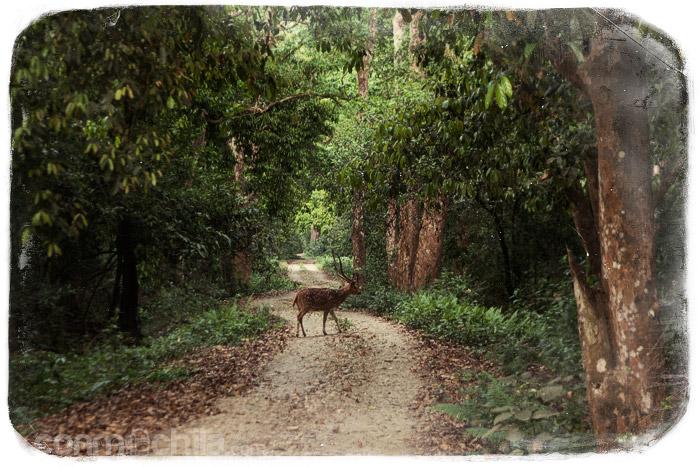 Un ciervo en nuestro camino