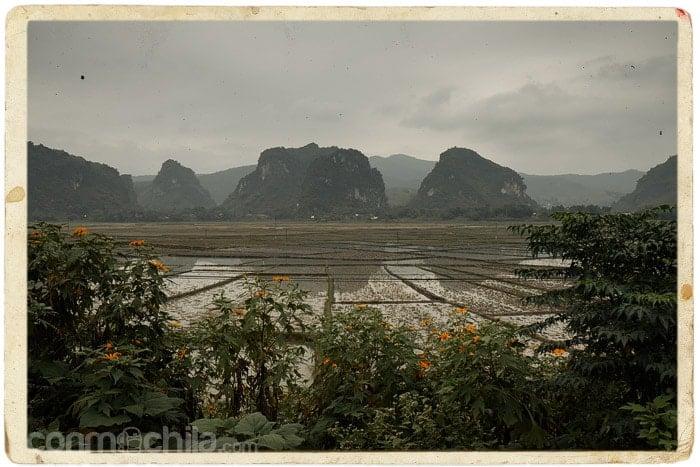 Los arrozales surgen de nuevo