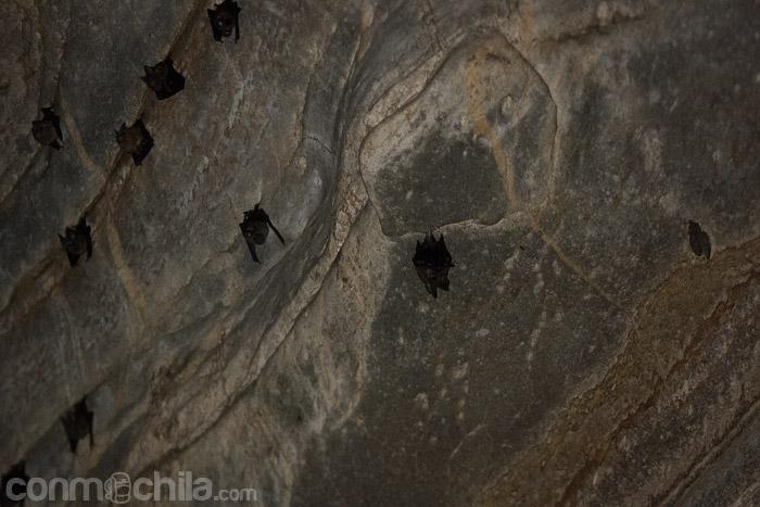 Los habitantes de la cueva