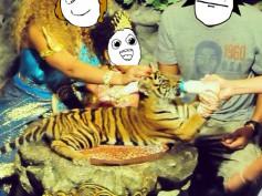 Centros de tigres: Top 11 Comentarios típicos y reflexiones
