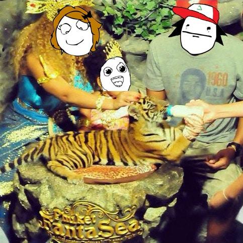 Foto típica en centros de tigres