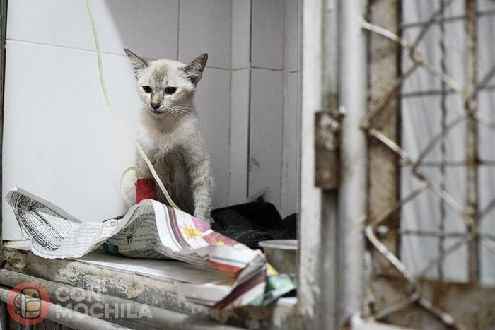Gato encontrado en la calle ingresado en la sala de recuperación