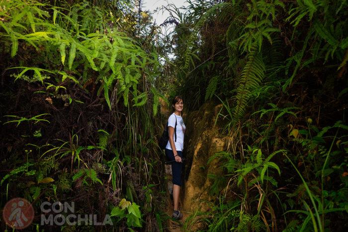 Empieza el trekking por Cameron Highlands