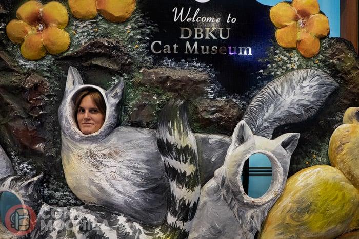 Bienvenidos todos los gatoadictos