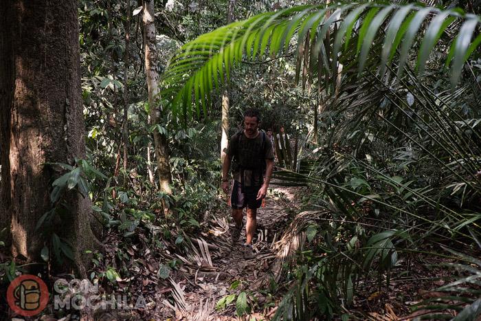 En el interior de la jungla