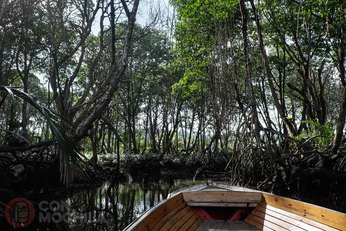 Profundizando en el manglar