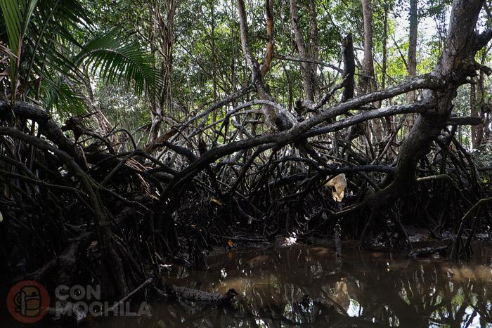 Detalle del manglar