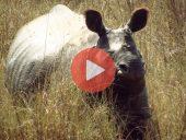 Vídeo 18 Viaje a Nepal 2014 – Parque nacional Chitwan, final del viaje