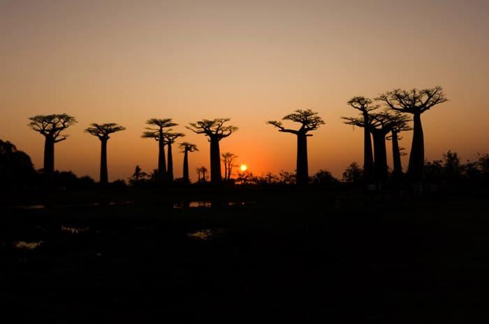 El atardecer en la Avenida de los Baobabs es una imagen inolvidable