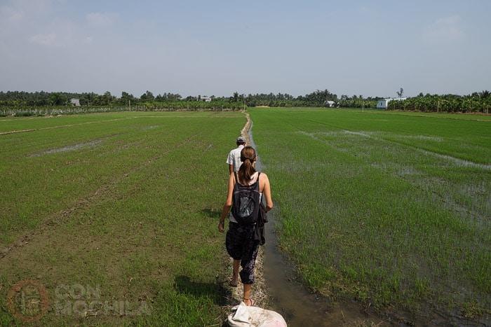 Paseando por los arrozales del delta del Mekong y sintiéndonos como en casa