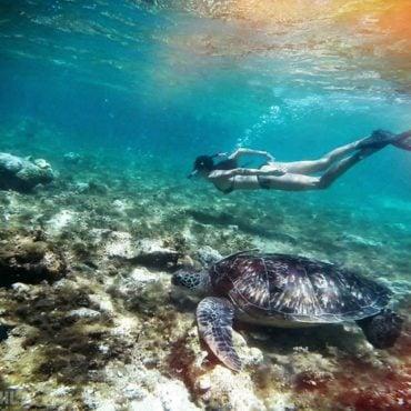 Snorkel en Apo Island (Filipinas)