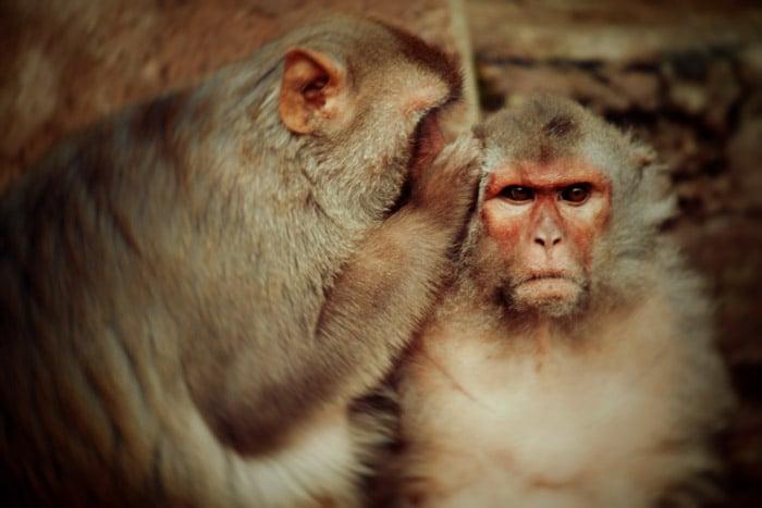La crónica cósmica 20000 monos