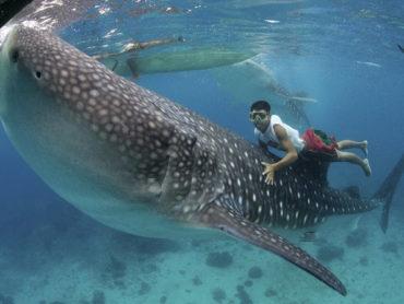 """Snorkel responsable: no metas """"la aleta"""" en tus viajes"""