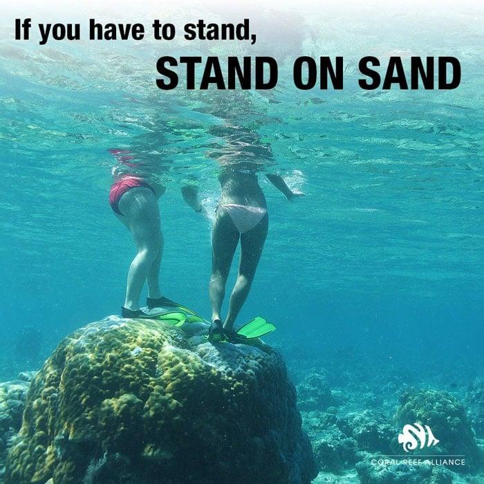 Si necesitas ponerte de pie, hazlo sobre la arena, no en el coral