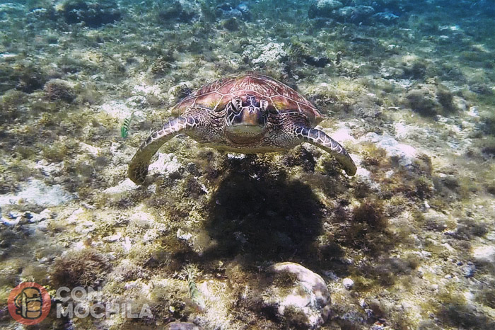 La primera tortuga que encontramos