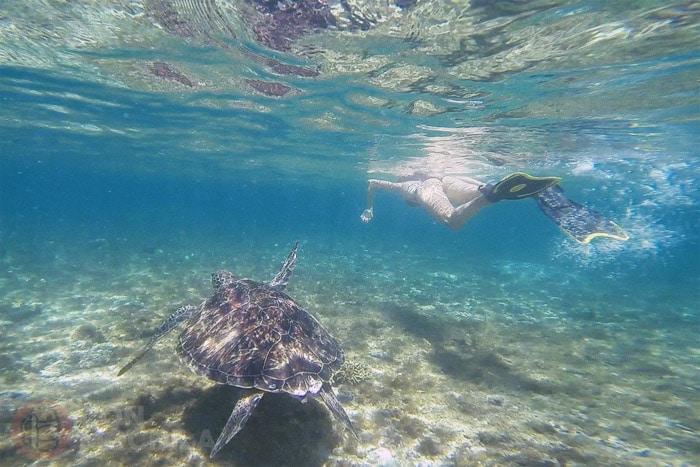 Nadando con ellas