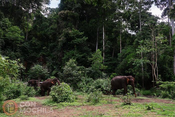 El día a día de los elefantes en Elephant Valley Project