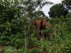 Elephant Valley Project: ver elefantes en Camboya de forma respetuosa