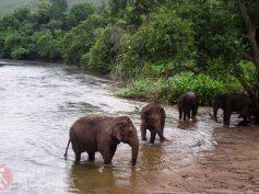 Elefantes y turistas: Qué estamos dispuestos a hacer (y qué no) por el bienestar animal