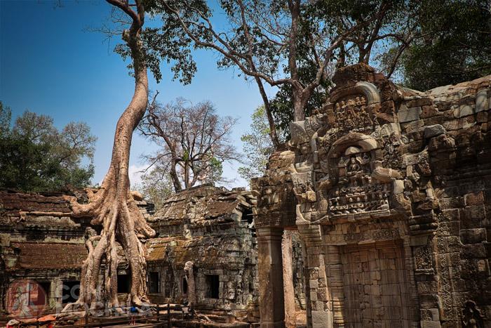 Templos de Angkor: Ta Prohm