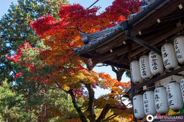 Itinerario de viaje a Japón: Arce japonés