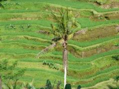 Itinerario de viaje a Indonesia en 43 días de Lola y Jandro