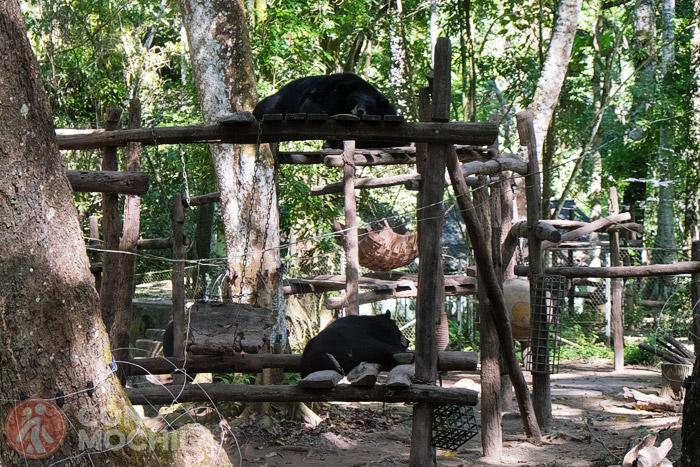 Centro de rehabilitación de osos