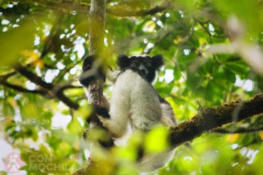 GUIA MADAGASCAR RESERVA ANALAMAZAOTRA