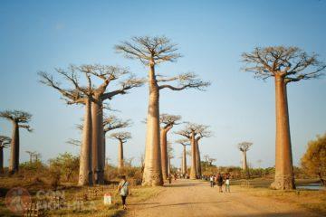 GUIA MADAGASCAR AVENIDA DE LOS BAOBABS