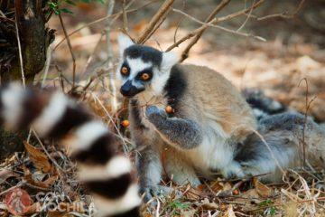 GUIA MADAGASCAR RESERVA DE ANJA