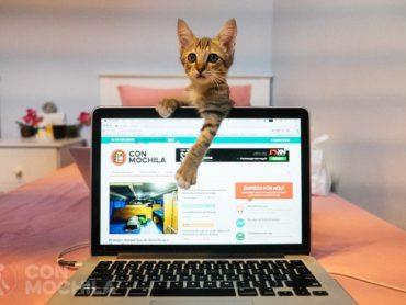 Songkran, la historia de un gato con mochila