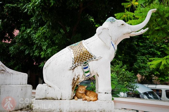 Este gato vive tranquilo y feliz en un templo