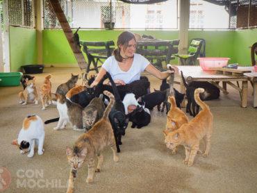 Santisook, ayudando a los perros y gatos de Chiang Mai