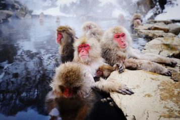 JIGOKUDANI SNOW MONKEY PARK 1