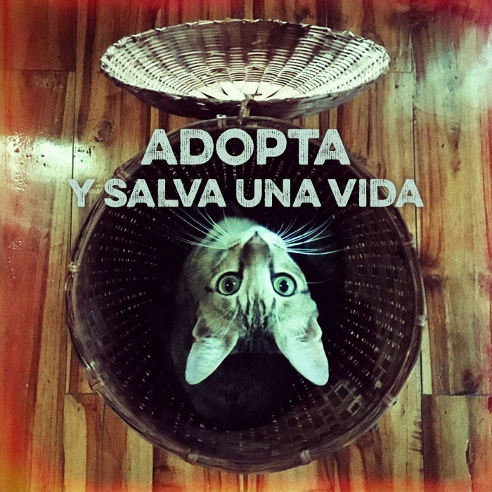 Adopta y salva una vida