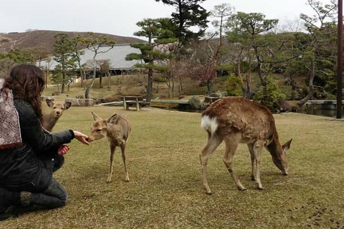 Compartiendo espacio junto a los mensajeros de los dioses en Nara