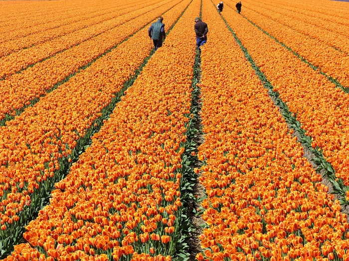 Itinerario de viaje a Holanda y Bélgica: De Amsterdam a Bruselas en bicicleta