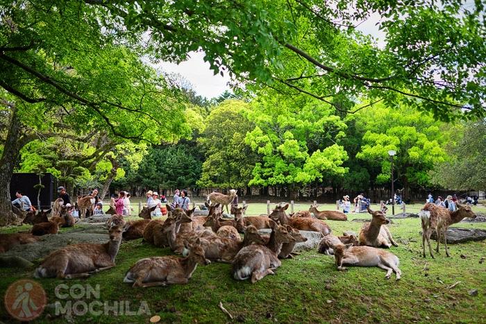 Los habitantes del parque