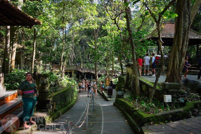 Camino de entrada a la jungla