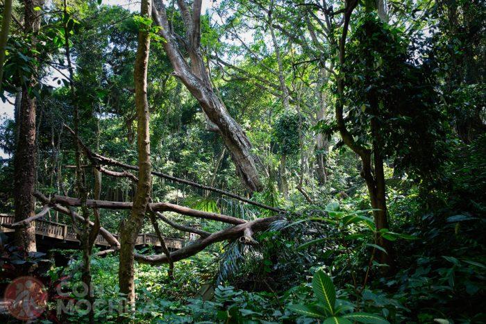 Detalle de la vegetación del Monkey Forest