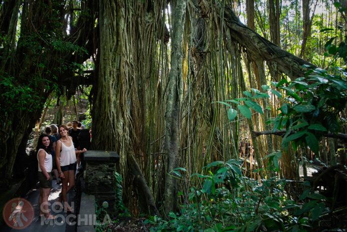 Dos chicas guapas al lado de un enorme árbol lleno de lianas