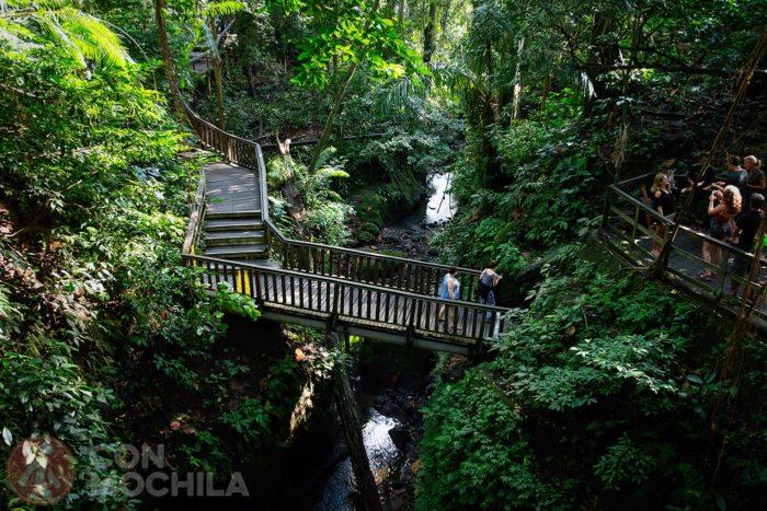 Pasarelas entre la jungla