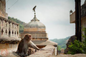 Jaipur Guia de viaje Templo de Galta